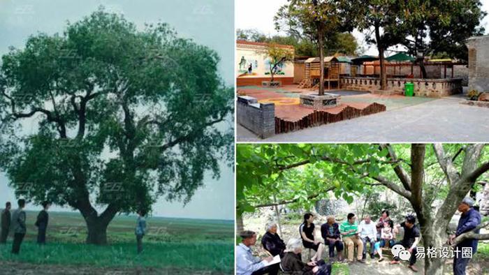 美丽乡村建设--绿化景观设计的探索-3